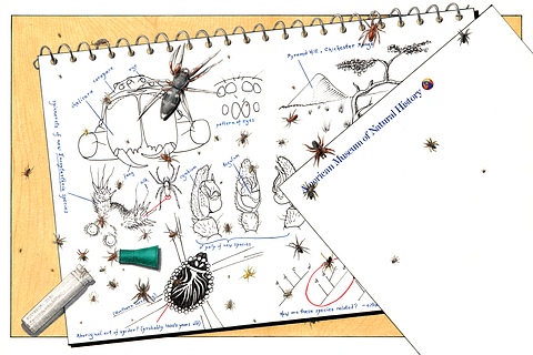 004_Arachnologist_journal_BarrettKlein